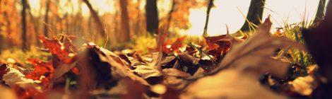 Kosmischer Wetterbericht: November